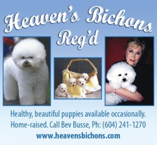 Heaven's   Bichon Frise Club of Canada
