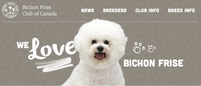 Introducing the new BFCC website | Bichon Frise Club of Canada